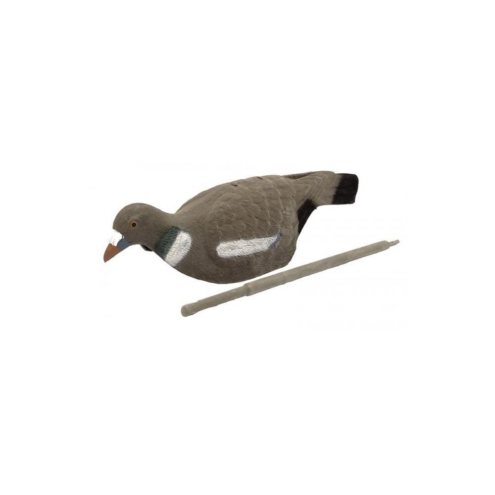 Unknown Pigeon Shell Decoy - Flocked