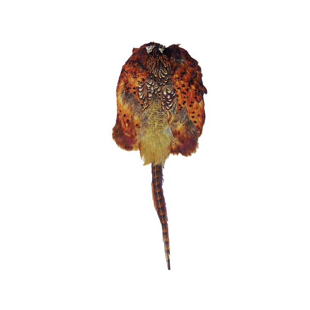 Bisley Pheasant Skin Pelt Unknown