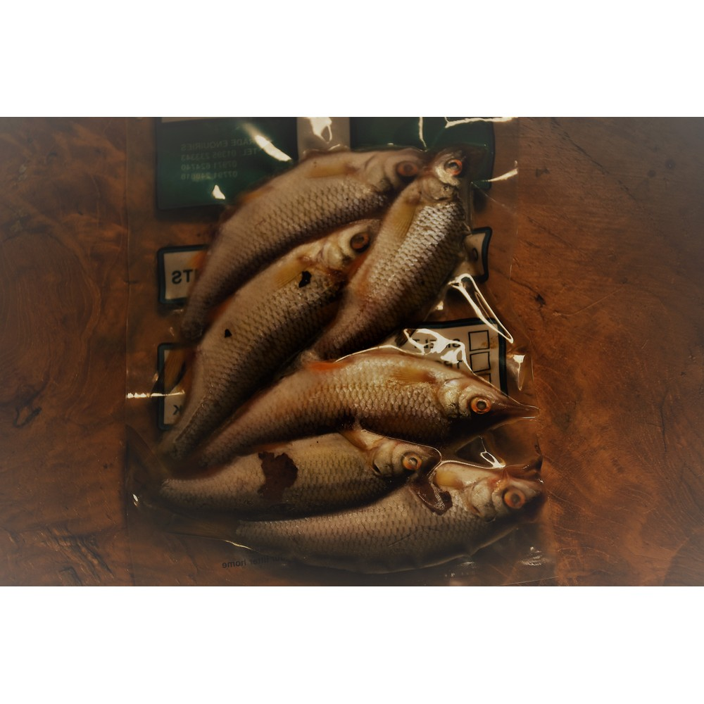 Allcocks Deadbaits - Roach 4-6 Small COLLECTION ONLY Roach
