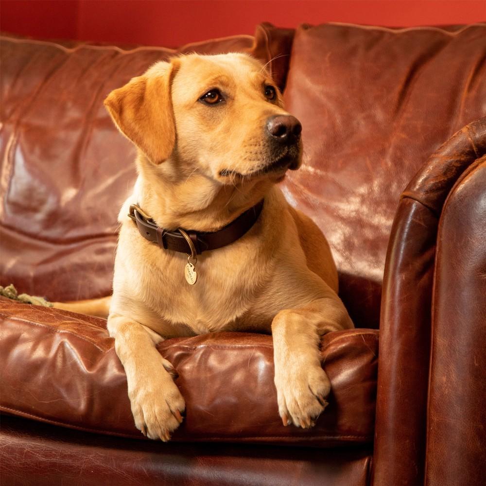 Le Chameau Dog Collar Marron Foncé