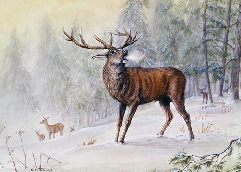 Countryside Greetings Countryside Greetings Dick Twinney Red Deer Stag Winters Voice Christmas Card - Stag
