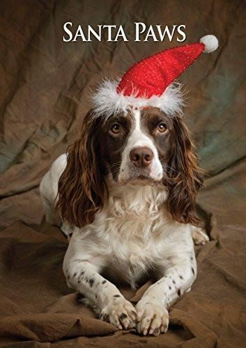 Countryside Greetings Countryside Greetings Charles Sainsbury-Plaice Working Springer Christmas Card - Spaniels