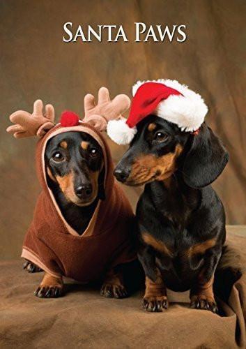 Countryside Greetings Countryside Greetings Charles Sainbury-Plaice Dachshunds Pair Christmas Pair - Dog Print