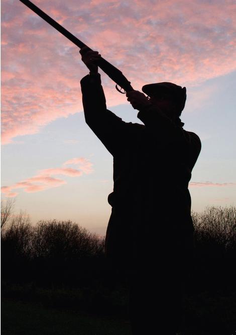 Countryside Greetings Countryside Greeting Charles Sainbury-Plaice An Evening Flight Greeting Card - Shooter